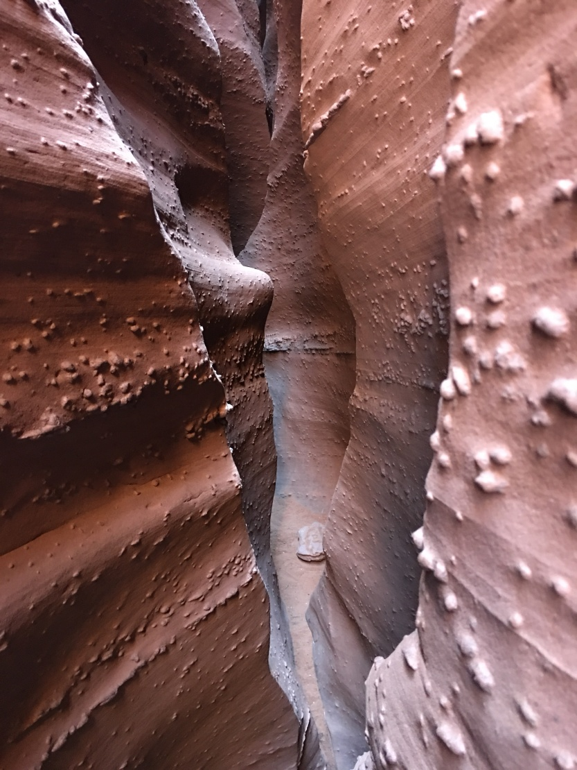 Looking back through Zebra Slot Canyon.